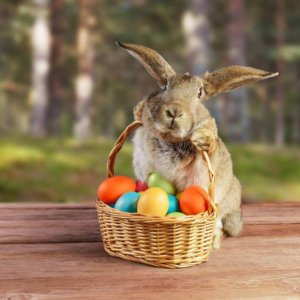 Easter-Chevron-Renaissance