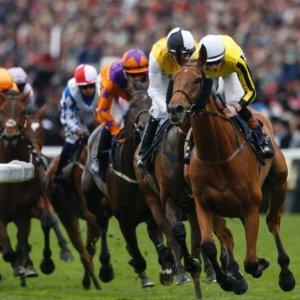 Horse-Race-1