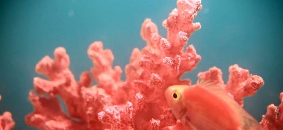 Pantone-Living-Coral-Indulge-Magazine