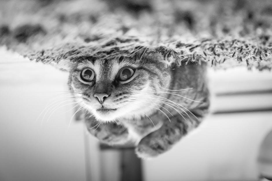 cats-exhibition-indulge-magazine